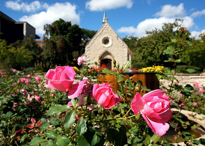 Roses in front of the St. Joan of Arc Chapel