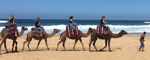 Students riding camels across the beach